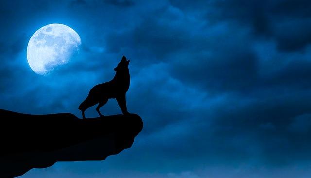 wolf-3691971_640